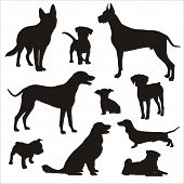 stock photo of pug  - vector Dog Silhouettes  - JPG