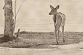 Lone deer on a frozen shoreline
