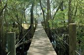 Suwannee River Boardwalk 2