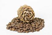 Cedar Nuts And Cone