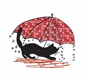 Cat and umbrella - bad weather