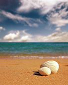 seashells on beach near sea - vintage retro style