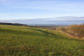 Scenic Meadow