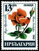 Vintage  Postage Stamp. Rosa Trakijka.