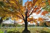 pic of cemetery  - Arlington National Cemetery near to Washington DC - JPG