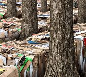 stock photo of natural resources  - Renewable resource and recycling cardboard packaging concept with stacks of compressed corrugated paper garbage with a group of trees growing through as a symbol to recycle for conservation and the environment - JPG