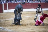 Spanish bullfighter Ivan Fandi�o with the capote or cape bull turns doing twirl with the horns in