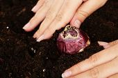 Hand with flower bulbs on humus background