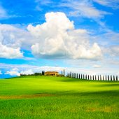 Tuscany, Farmland, Cypress Trees Row And Field. Siena, Val D Orcia