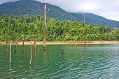 Dead Tree In Lake Of Dales