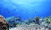 stock photo of coral reefs  - shallow coral reef off of uepi - JPG