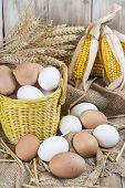 foto of hen house  - Basket with fresh range eggs and cereals to feed hens in the hen house - JPG