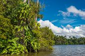 river in the peruvian Amazon jungle at Madre de Dios Peru