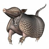 stock photo of armadillo  - 3D digital render of a Armadillos a New World placental mammal with a leathery armor shell isolated on white background - JPG