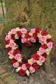 stock photo of sympathy  - Heart shaped sympathy flowers near a tree