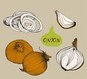 Onion. Set f illustrations