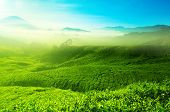 Landscape view of tea plantation with blue sky in morning. Beautiful tea field Cameron Highlands in