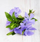 Beautiful periwinkle flowers on wooden table