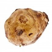 pic of jerusalem artichokes  - Single Jerusalem artichoke - JPG