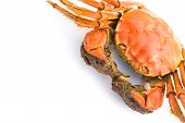 Cooked Crab On A White Background With Copy Space