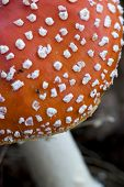 poisonous fungus in forest