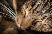 A sleeping cat holding its head on its paw