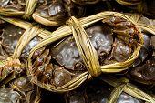Yangcheng lake chinese crabs