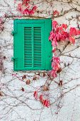 Green Wooden Window And Red Leaves In Autumn