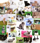 Collage of pretty cats