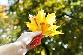 Beautiful autumn leaves in hand, outdoors