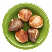 tulip bulbs in an isolated green bowl ready for planting in a fall