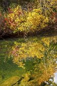 Yellow Red Leaves Fall Water Reflection Abstract Wenatchee River Valley Leavenworth Washington