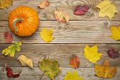 grained weathered wood background with colorful dry leaves and pumpkin