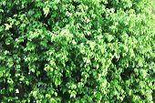 Beautiful green bush close up