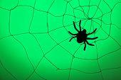 Spider on web. Halloween decoration concept