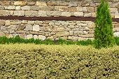 Hedge Over Wall