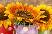Beautiful sunflowers in cans on wooden background