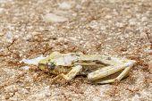 Ants Eat Tree Frog