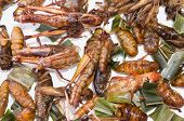 stock photo of larva  - Crispy fried insects grub larvae Grasshopper CRICKET - JPG
