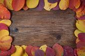 Autumn Leaf On A Wooden Board