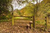 Stile In Plessey Woods