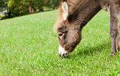 Small sweet donkey in a field