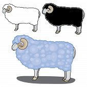 illustration of sheep in different styles