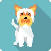 pic of yorkshire terrier  - dog Yorkshire terrier standing icon flat design - JPG