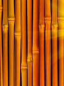 Trunk  Tree  Bamboo