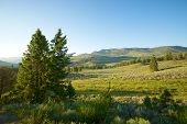 Path Into Yellowstone Park