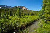 Stream Through Natural Wilderness