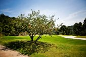 Golf course with beautiful tree with flowers
