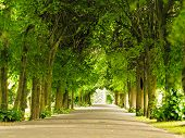 pic of path  - sidewalk walking pavement alley path with trees in park - JPG