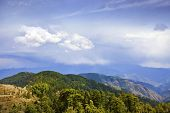 picture of himachal pradesh  - Trees with mountain range in the background - JPG